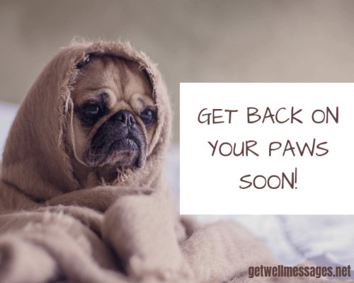 get well soon message for dog sick unwell blanket