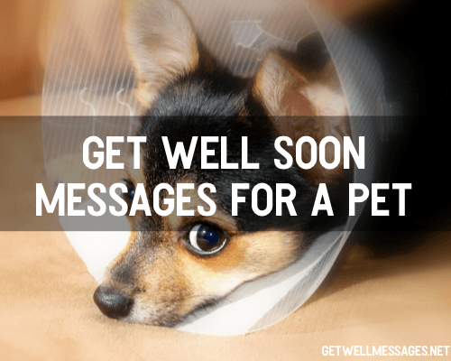 Get Well Soon Messages for a Pet | Get Well Messages